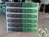 TIM CUP: Avellino-Frosinone 2-1, D'Angelo e Castaldo si regalano la Juve!